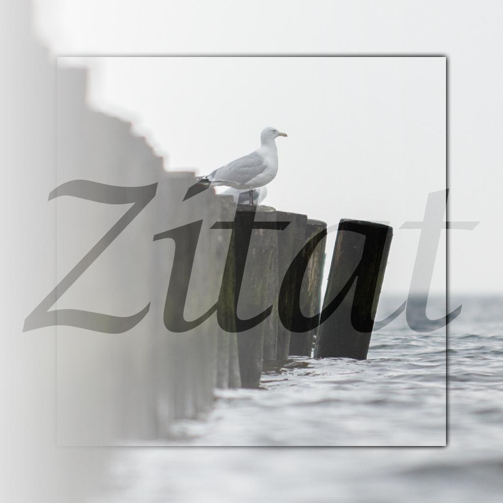 Zitat – 20140526